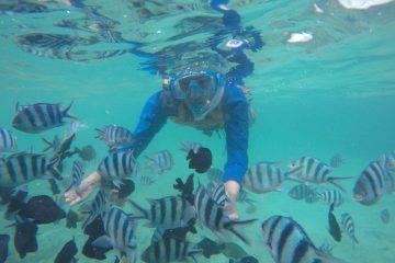 Berenang bersama ikan