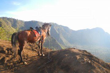 Kuda di Gunung Bromo