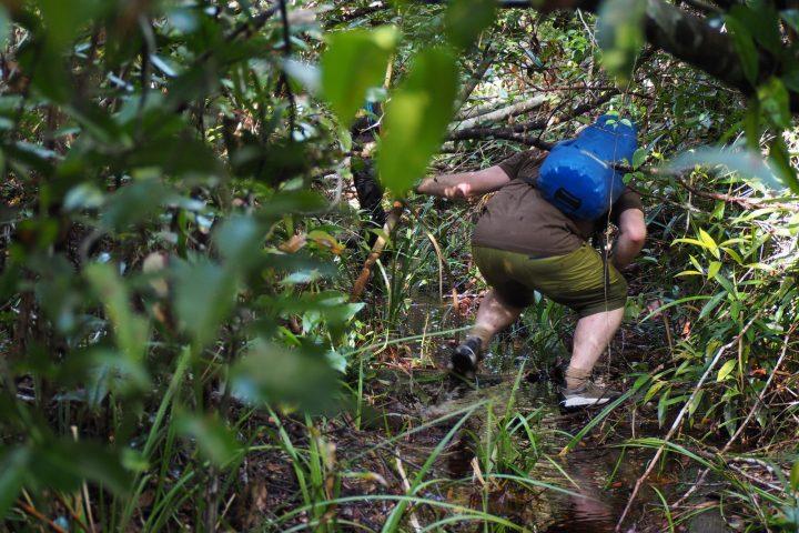 Trekking di Taman Nasional Sebangau