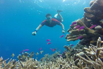 Berenang di Kepulauan Derawan