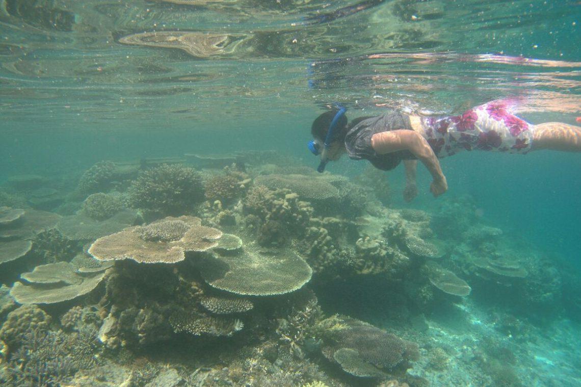 Menikmati terumbu karang
