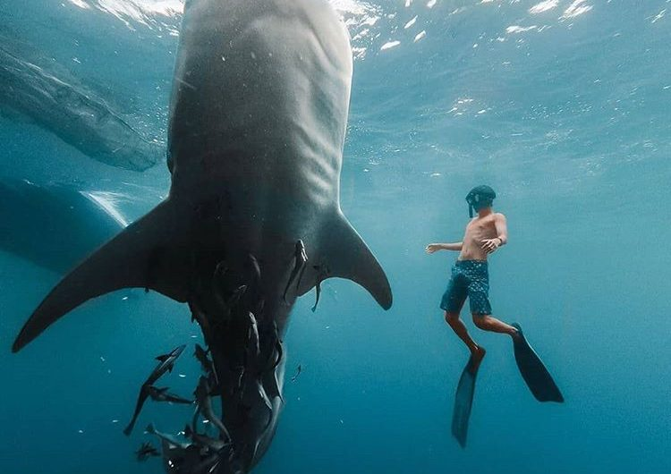 Wisata Pulau Derawan